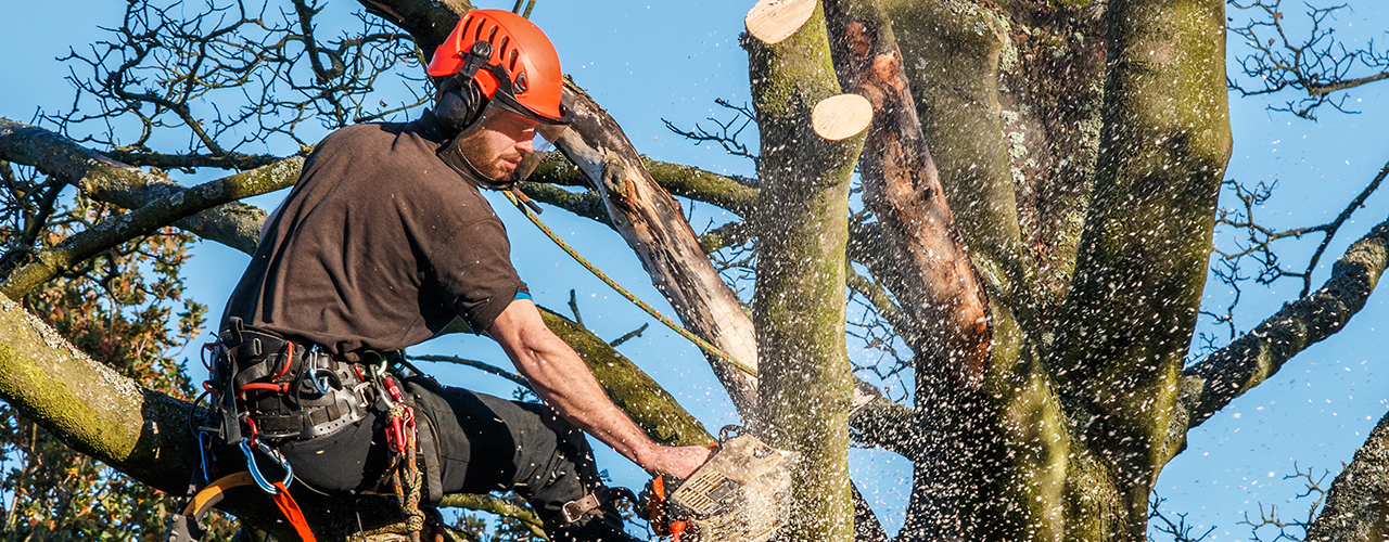 Élagage des arbres rue et place d'Ariane