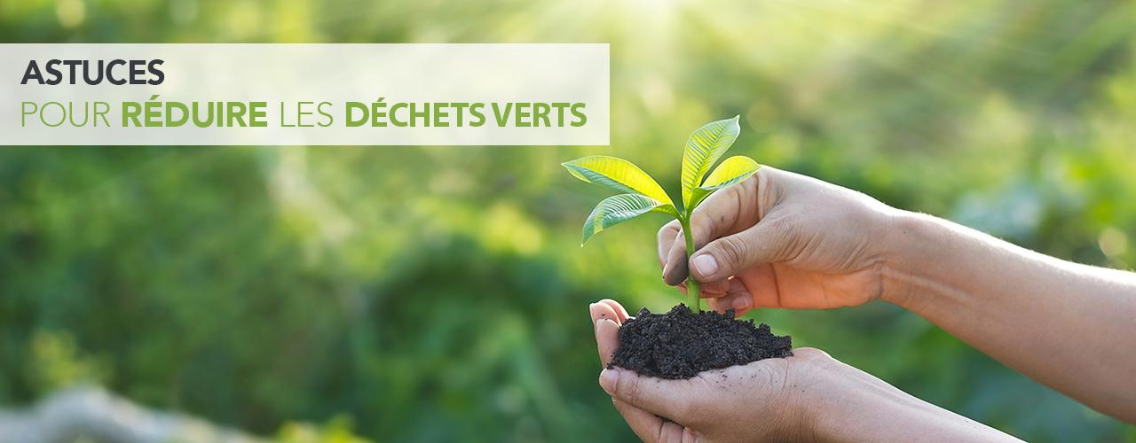 Astuces pour réduire les déchets verts